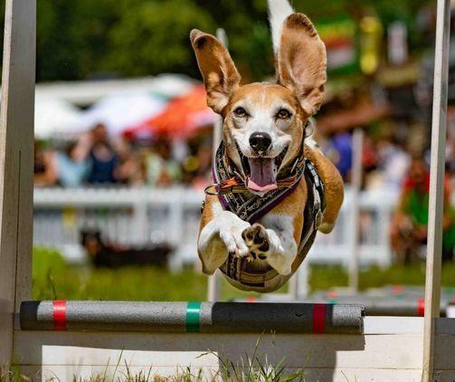 Dog Fest Cirencester