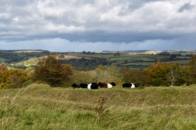 Kilkenny Nature Reserve