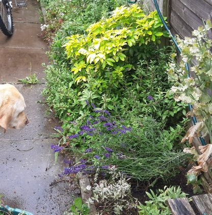 Planting in the Sensory Garden at Cheltenham Animal Shelter