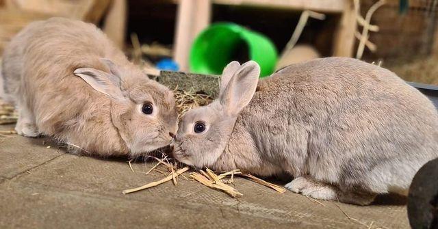 Cheltenham Animal Shelter Summer Celebration