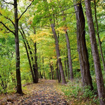 Woodmancote Autumn Trail