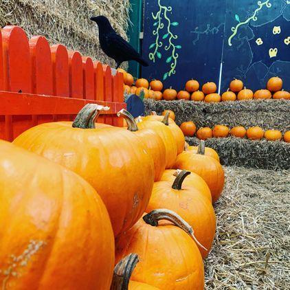 Halloween at Roves Farm