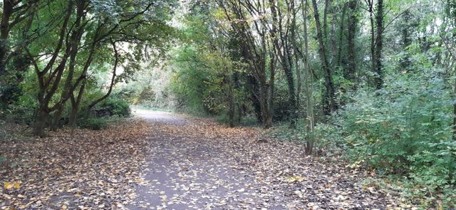 Wyken Croft Nature Park