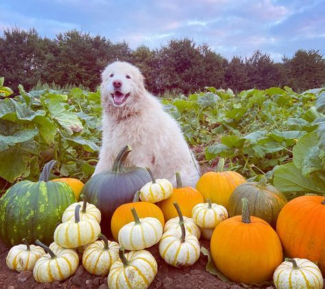 The Pumpkin Patch at Wolvey | Hinckley