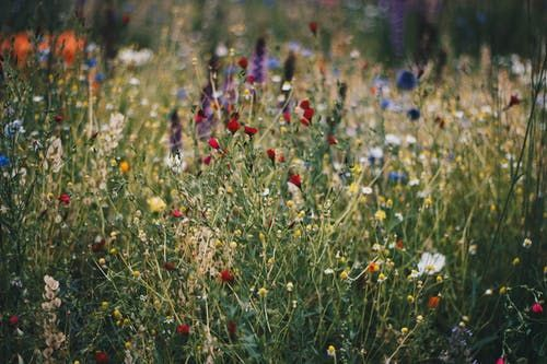 Wellness in the Meadow
