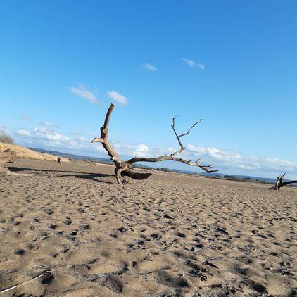 Longley Sands