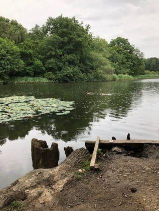 Cannop Ponds