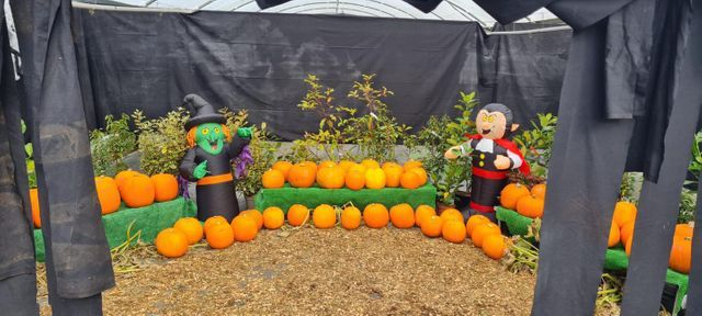 October Half Term at Elm Nursery
