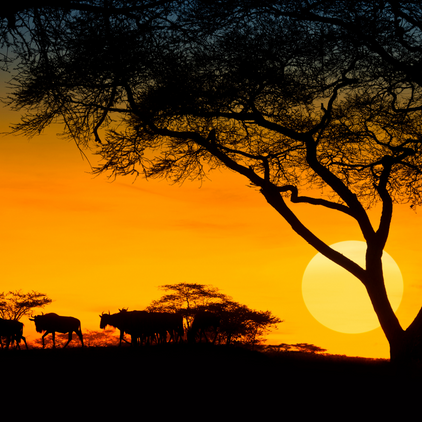 Twighlight Safaris