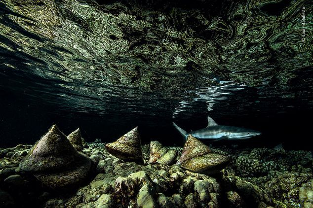 Wildlife Photographer of the Year at The Collection Museum