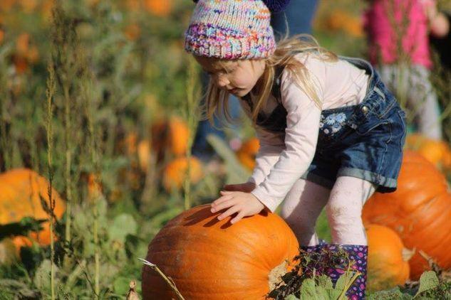 Bell's Pumpkin Patch Lincolnshire