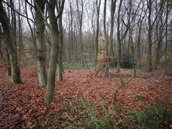 Tunman Wood, Lincolnshire