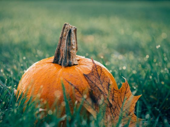 Halloween Events in Lincoln's Green Spaces The Arboretum