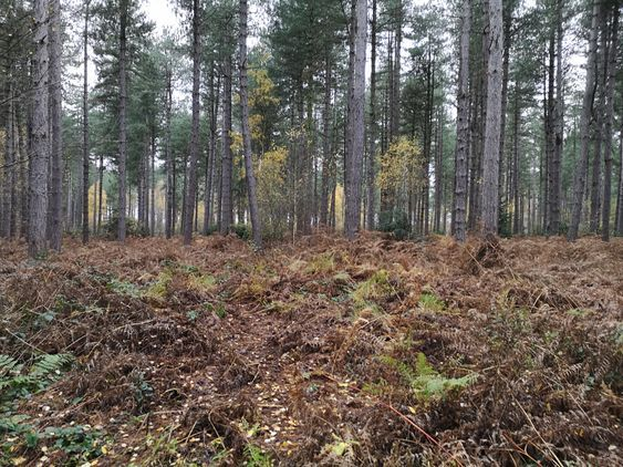 Stapleford Woods, Lincolnshire