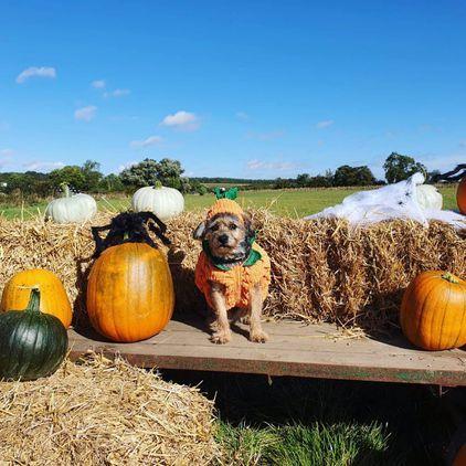 Barkston Pumpkins PYO Lincolnshire