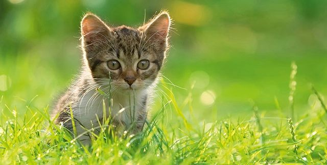 Cats Protection Autumn Fayre