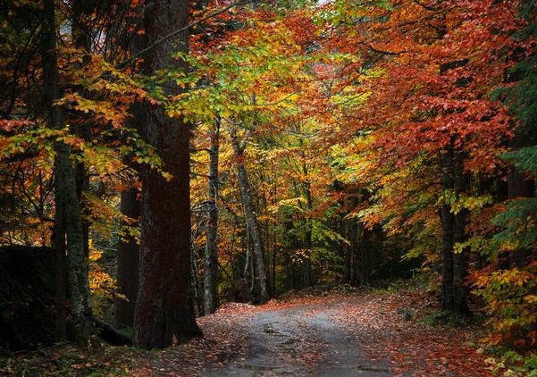 Pathway to Hibernation trail to Cotehele Mill