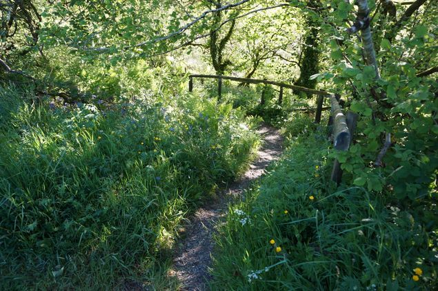 Halloween Trail at The Vale of Avalon