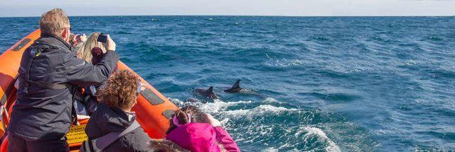 Padstow Sealife Safari