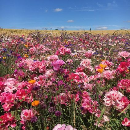 The Flower Field by Roskilly & Henwood