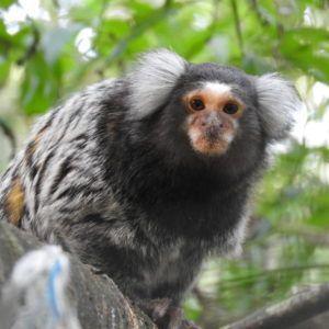 The Monkey Sanctuary
