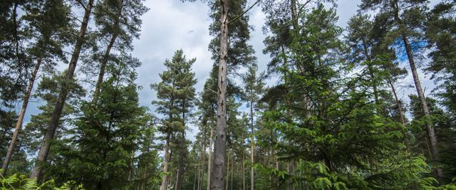 Holsworthy Woods