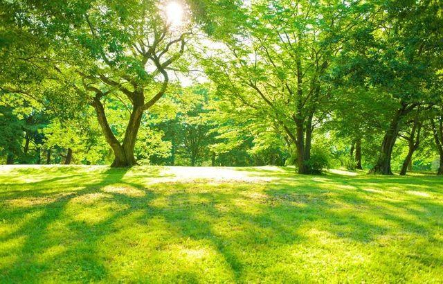 Pengover Park