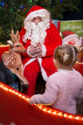 Roves Farm Christmas Experience