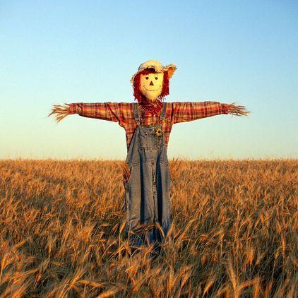 Half Term Scarecrow Trail