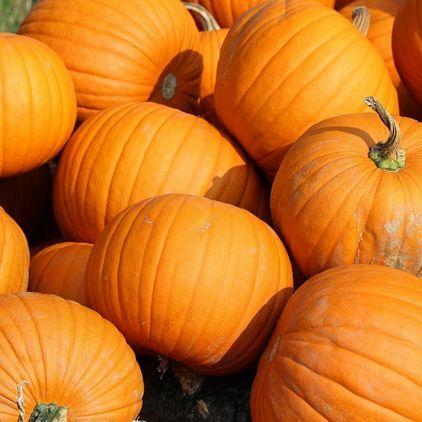 The Annual Pumpkin Show