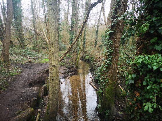 Aldermoors Nature Reserve
