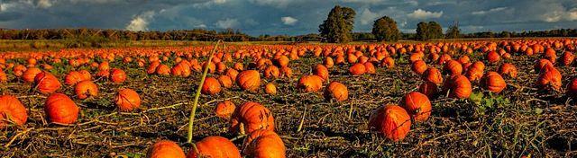 Pumpkin Festival at Crockford Bridge