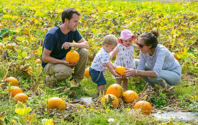Millets Farm PYO Pumpkins