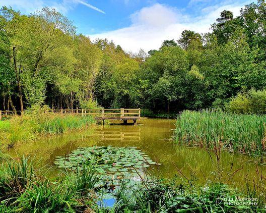Pinewood Woodland Walk