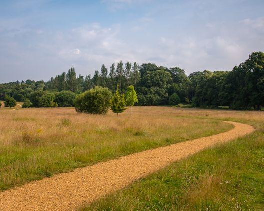 Peacock Meadow